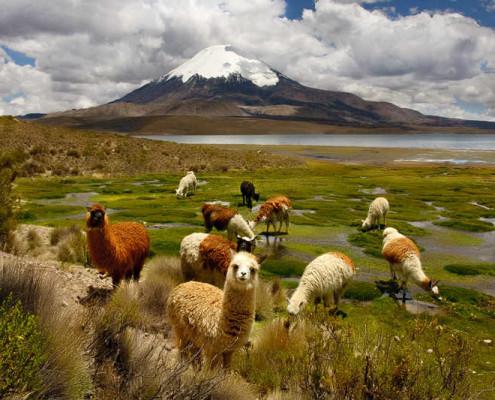 Chile wakacje atrakcje Lauca