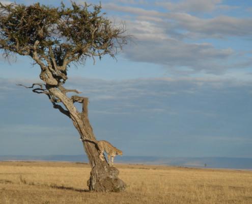 Kenia wycieczki indywidualne