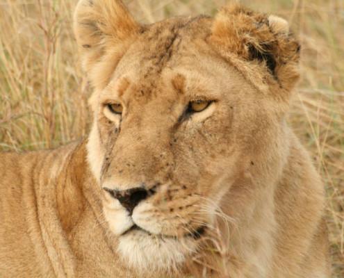 Kenia wycieczki safari