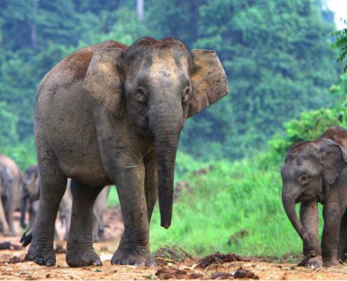 Wakacje Malezja Borneo wycieczki