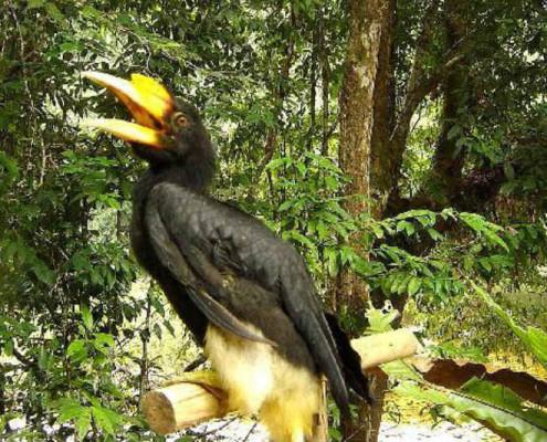 Borneo Malezja wakacje. wycieczki indywidualne