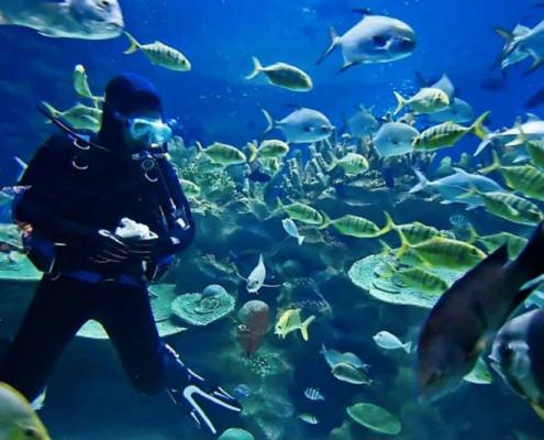 Nurkowanie Mauritius wycieczki