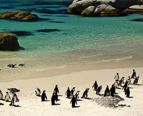 RPA wakacje pingwiny koło Przylądka Dobrej Nadziei