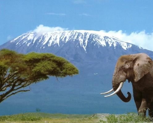 Wakacje Tanzania - Kilimanjaro trekking