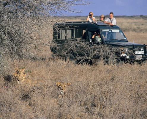 Tanzania atrakcje safari