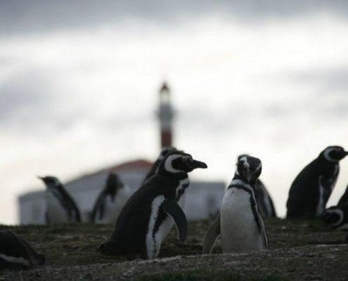 Chile wakacje atrakcje Pingwiny na przylądku Horn