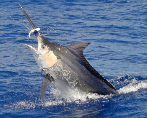 Mauritius wycieczki połowy tuńczyków