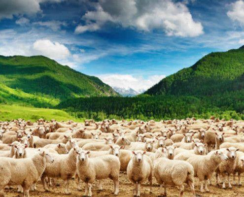 Nowa Zelandia wycieczki indywidualne