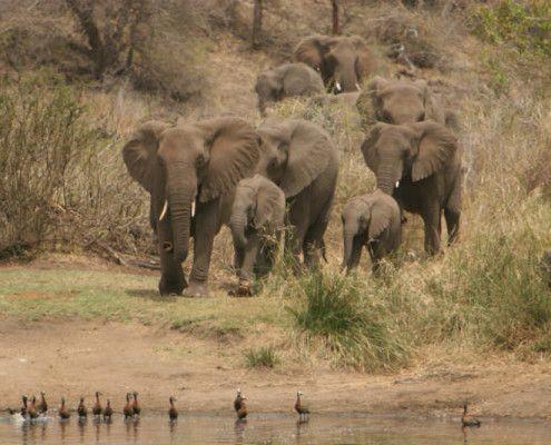 RPA wakacje safari
