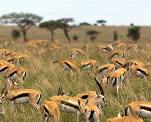Safari Tanzania wycieczki