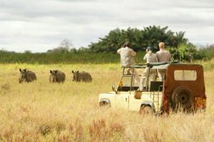 Kenia atrakcje safari