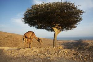Oman wakacje wycieczki