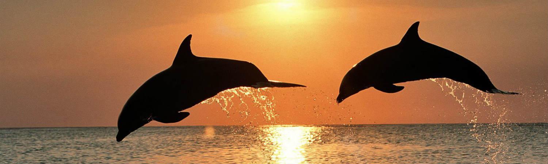 Honduras delfiny. Niezapomniane wakacje