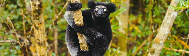 Madagaskar-wycieczki (1)