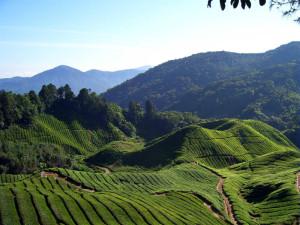 Malezja atrakcje trekking