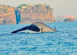 Wakacje Sri Lanka wieloryby wakacje