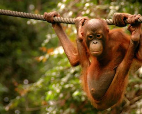 Borneo Wakacje