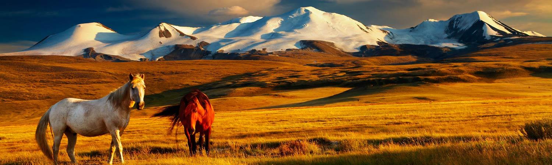 Mongolia wycieczki objazdowe z TOP TRAVEL