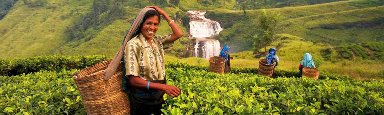 Sri Lanka wycieczka indywidualna