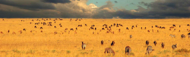 Tanzania wycieczka objazdowa