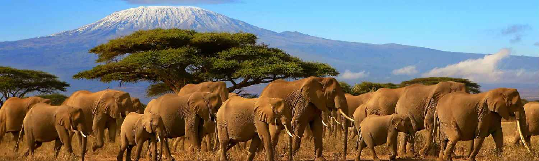 Wakacje Tanzania wycieczka objazdowa Kilimanjaro. Tanzania wycieczki indywidualne