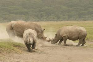 Wakacje Kenia safari nosorożce