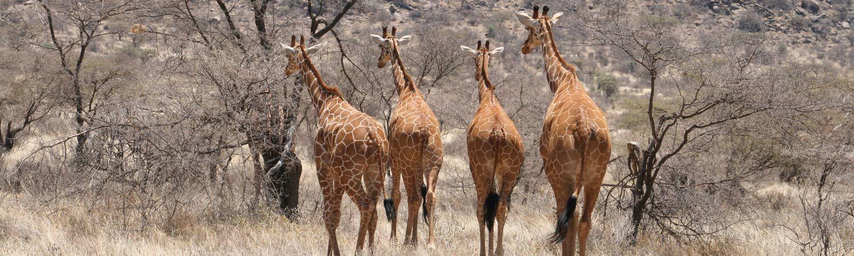 Kenia wakacje wycieczki safari