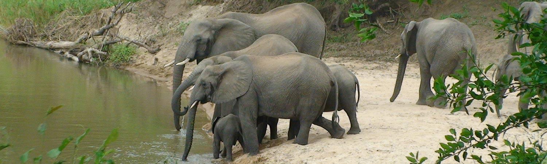 RPA wakacje Park Krugera