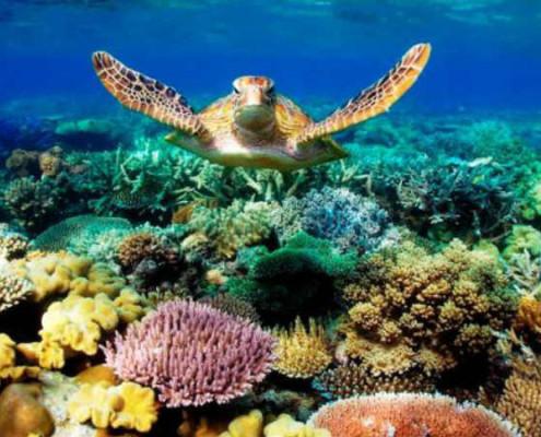 Australia wakacje dla aktywnych