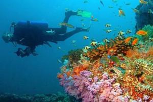 Filipiny atrakcje nurkowanie