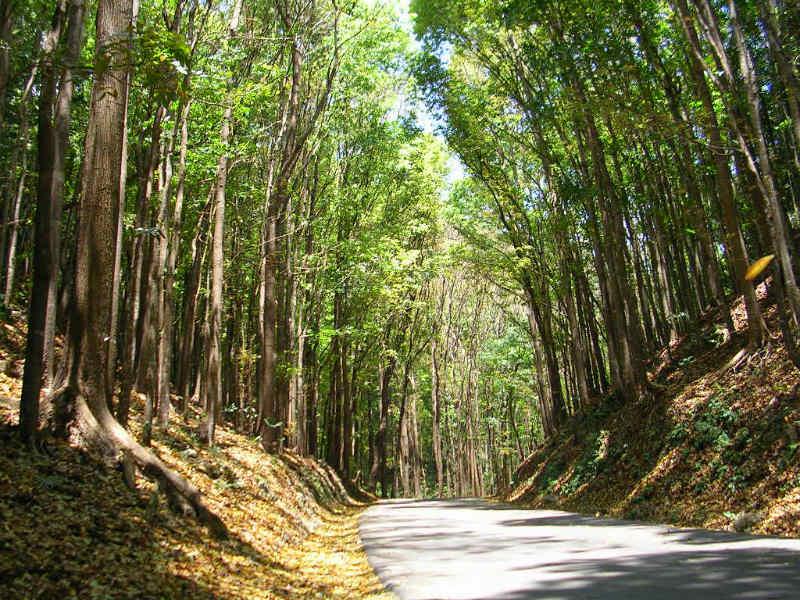 Filipiny wycieczki objazdowe