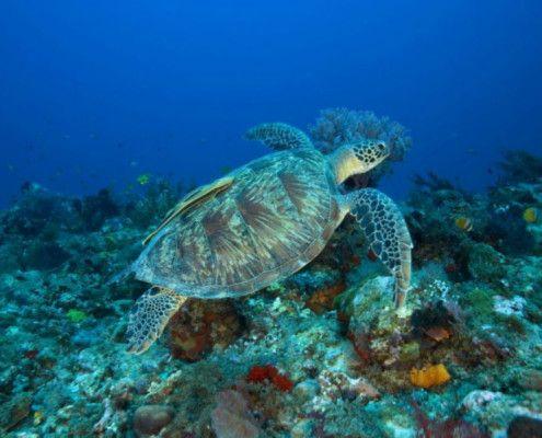 Lombok wycieczki wakacje Indonezja nurkowanie