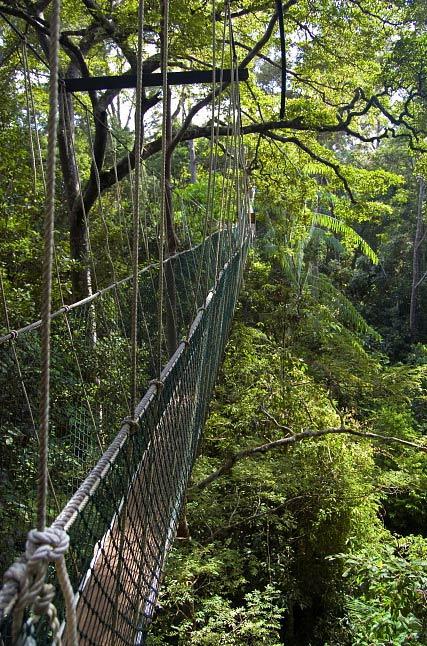 wycieczka Borneo Taman Negara trekking wiszacy most