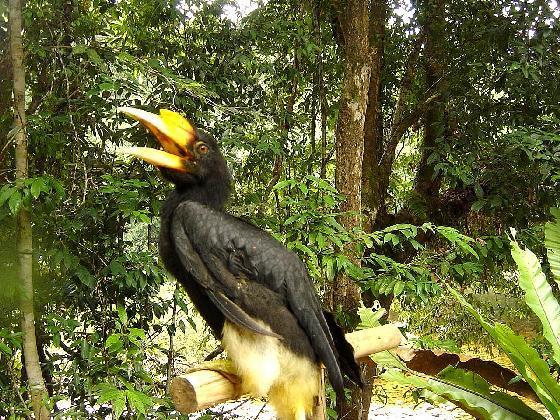 Borneo egzotyczne wycieczki. Taman Negara Malezja