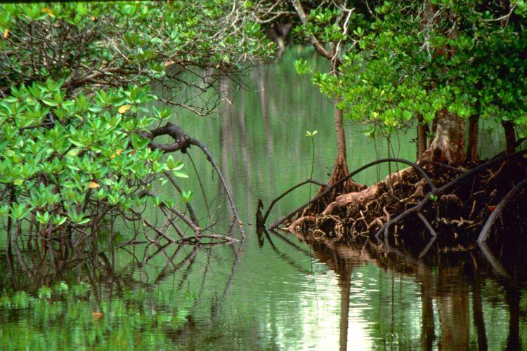 Borneo egzotyczne podróże Dżungla. Malezja. Malezja wycieczki