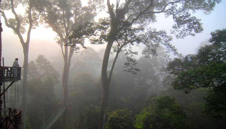 Borneo egzotyczne wycieczki. Las Tropikalny. Malezja