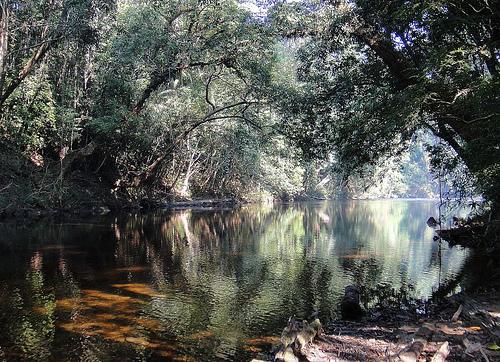 Borneo egzotyczne podróże Lasy tropikalne. Malezja wycieczki