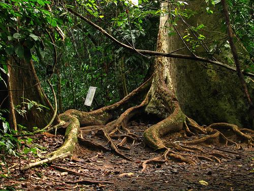 Borneo egzotyczne podroze Las Deszczowy SUKAU. Malezja wycieczki