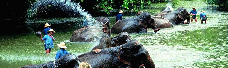 Tajlandia egzotyczne wycieczki z TOP TRAVEL. Słonie