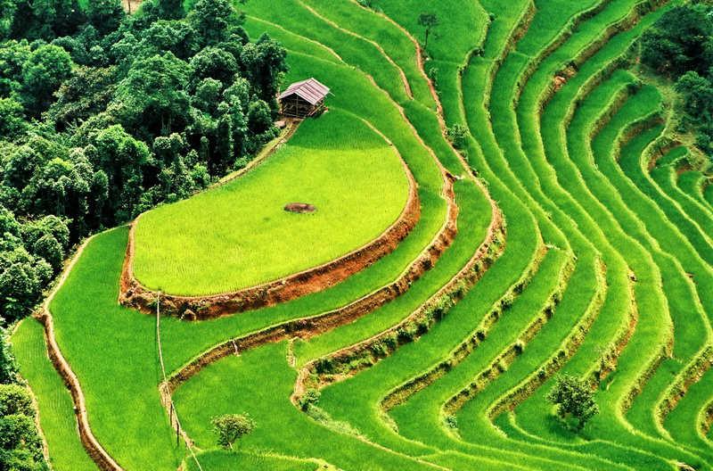 Wietnam atrakcje turystyczne SAPA pola ryżowe. Wycieczki objazdowe TOP TRAVEL