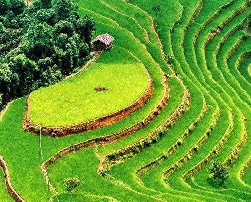 Wycieczki Wietnam. tarasy ryzowe