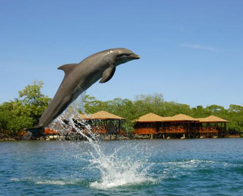Honduras Roatan delfiny