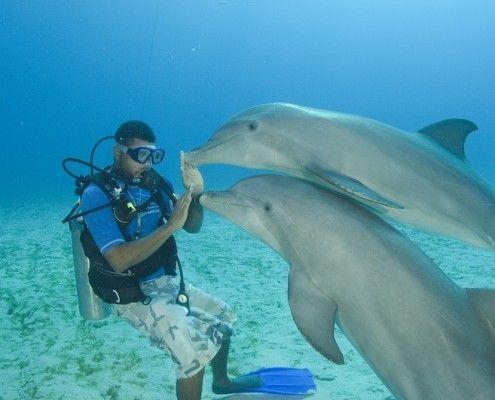 Honduras wakacje. Nurkowanie z delfinami