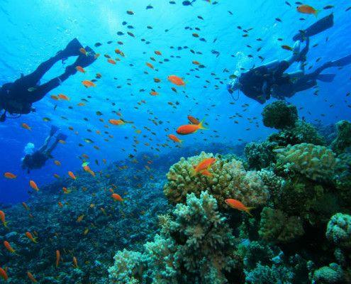 Honduras nurkowanie wycieczki wakacje podróże indywidualne z TOP TRAVEL