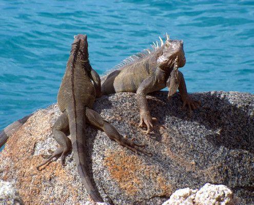 Aruba wycieczki przyroda