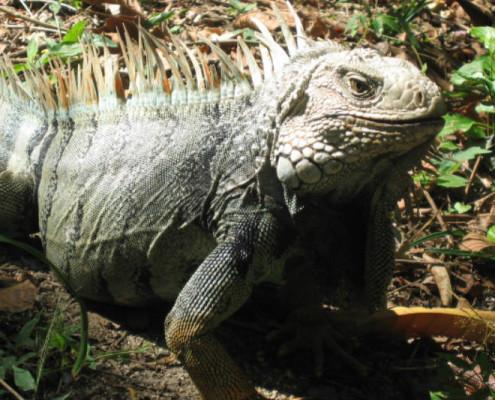 Kolumbia wakacje przyroda
