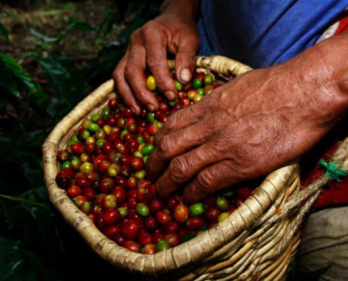 Kolumbia wakacje plantacje kawy