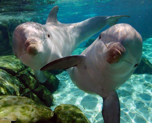 Kolumbia wczasy delfiny