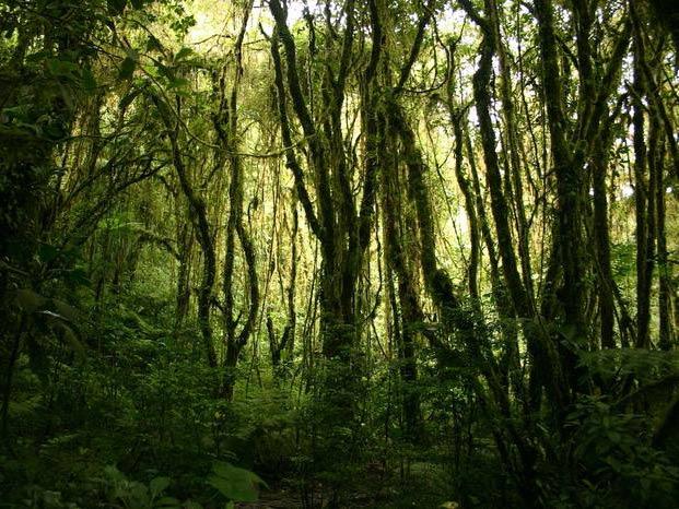 Kostaryka Monteverde. rezerwat Lasów Chmurowych wycieczki.