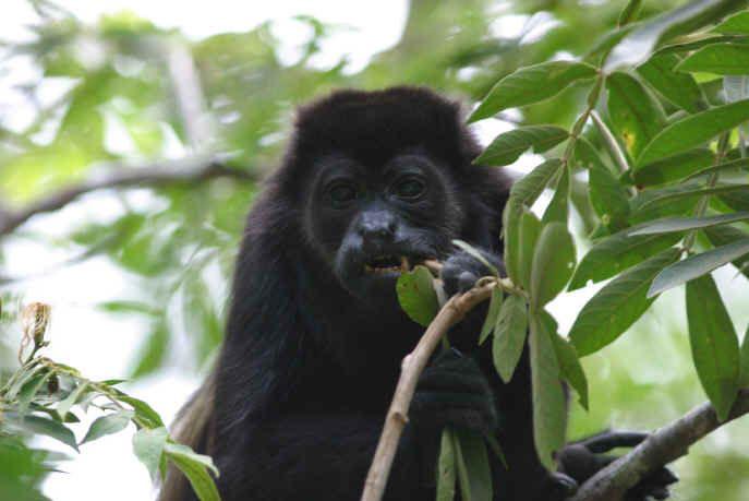Podróże Kostaryka Monteverde